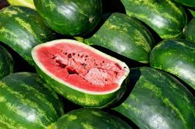 <b>Watermelons</b>: Planting, Growing, and Harvesting <b>Watermelons</b> at ...
