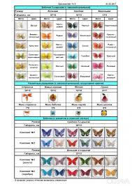 ᐈ <b>Бабочки декоративные</b> ᐈ Запорожье <b>13</b> ГРН - OBYAVA.ua ...