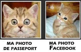 """Résultat de recherche d'images pour """"image de chat mdr"""""""