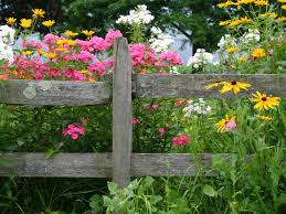 Small Picture List of the Best Perennial Flowers DIY