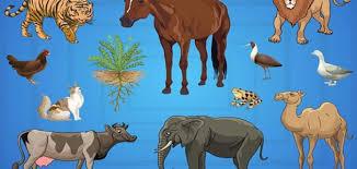 نتيجة بحث الصور عن مجموعة كائنات حية