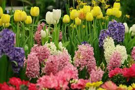 Imagini pentru floriile
