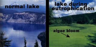 Image result for eutrophication images