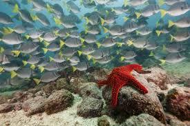 <b>Морские звезды</b>. Фото и видео <b>морских звезд</b>