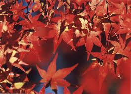 「秋」の画像検索結果