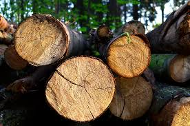 Malaysia jails Vietnamese <b>man</b> for illegal logging, <b>reserve</b> ...