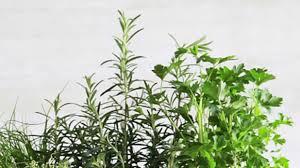 Kitchen Windowsill Herb Garden Windowsill Herb Gardening Archives Herb Gardening Today