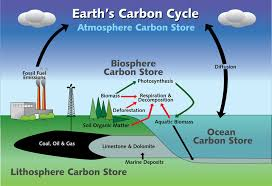 earth    s carbon cycle   nys dept  of environmental conservationnysdec   large diagram illustrating the earth    s carbon cycle