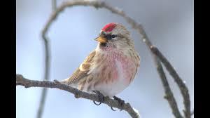 Птицы леса - <b>Зимние</b> учеты - YouTube