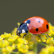 Forever finding ladybugs for my beautiful @Joana <3 <--- From my ...