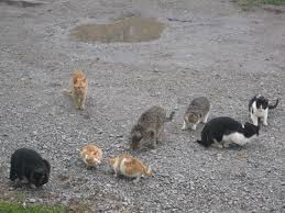 National Cat Herders Day | Interesting Thing of the Day