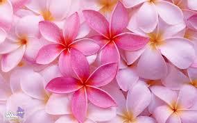 پوستی زیبا به لطافت گل