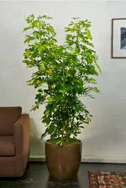 your online indoor plants nursery and pots store the most convenient way to buy house plants and office plants in houston amazing office plants