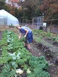 job shadow how to be an urban farmer common ground m dafarm2 jpg
