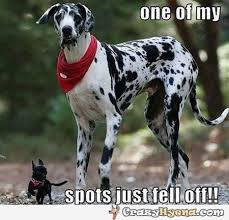 Funny Great Dane picture with little dog. via Relatably.com