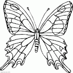 Раскраски бабочки красивые распечатать