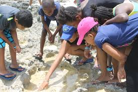 coastal field trips reef environment educational foundation riveting rocky shore