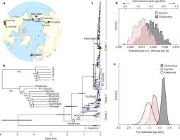 Million-year-old <b>DNA</b> sheds light on the genomic history of ...