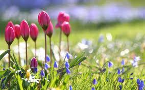 beautiful nature spring flower wallpaper beautiful 3d nature wallpaper1 hd wallpapers