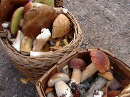 Kuvahaun tulos haulle sienimetsä