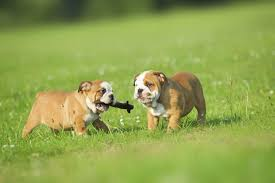 <b>Active Dogs</b>: The Benefits for <b>Dogs</b> and Their Owners - Animal <b>Planet</b>