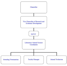 administration and organizationorganizational diagram