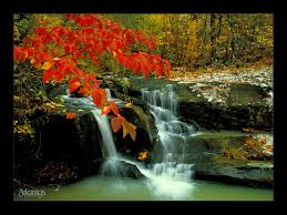 service for you   free essay on beauty of nature animal farm  free essay on beauty of nature