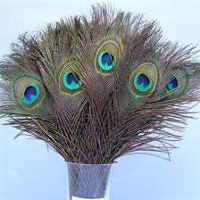 <b>100pcs</b>/<b>Lot Natural</b> Peacock Feathers Eyes , About 30cm ,10 12 Inch ...