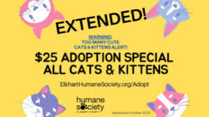 Too Many <b>Cute Cats</b> and Kittens! - Humane Society of Elkhart County