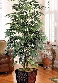 bamboo palm best office plants no sunlight