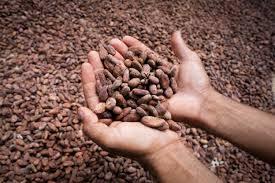 Resultado de imagen de cacao de comercio justo