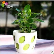 fragrant flowers bumper desk office small potted plants purify the air refreshing taste bonsai cheap office plants