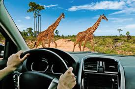 Wild Florida Drive-thru <b>Safari Park</b>   <b>Animal Park</b>   Orlando, FL