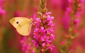 Resultado de imagem para ART BEAUTIFUL butterfly