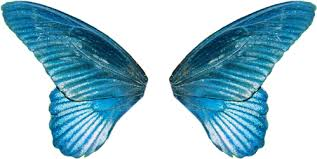Image result for butterfly wings