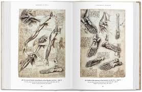 scoop review of books acirc leonardo studies of the muscles and anatomy of the shoulder arm and foot from