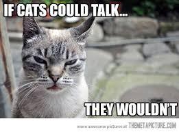 funny-angry-cat-meme.jpg via Relatably.com