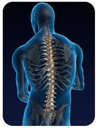 Image result for pictures of spine and neck