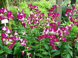 Kết quả hình ảnh cho hoa lan
