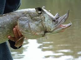 Image result for rhino don fish