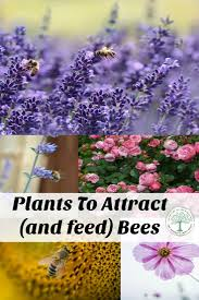 best ideas about lawn feed grass fertilizer plant some of these flowers to help attract and feed the bees the homesteading hippy
