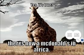 funny animal memes pinterest | High Quality Wallpapers | Funny ... via Relatably.com