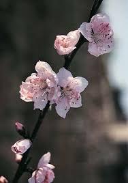 Rosaceae | plant family | Britannica.com