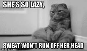 Lazy cat meme - Imgflip via Relatably.com