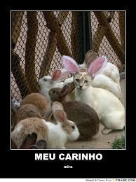 MEU CARINHO... - Cat Bunny Disguise Meme Generator Posterizer via Relatably.com