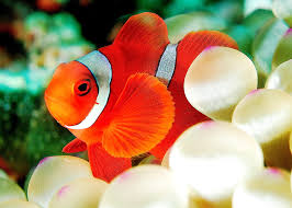 Clownfish for Skype windeos 7 32 bit 64 bit