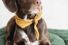 """<b>Pet bandana</b> """"Tori"""" • double-sided, mustard colour • by band&roll"""