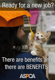 we re hiring in nyc jobs at the aspca aspca professional we re always hiring and we ve compiled what you need to know about available positions in our jobs