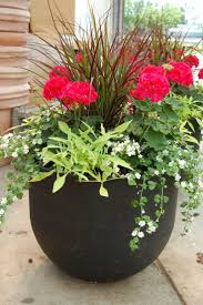 potted planst patio ferns images of potted plant ideas how to plant a patio pot container garden