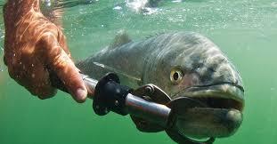 A Guide to <b>Fish Grippers</b> | Sport <b>Fishing</b> Magazine